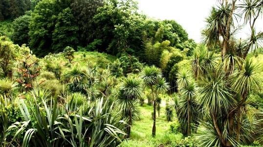 10433973_ogrod-botaniczny-w-batumi-gruzja